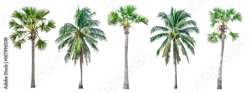 Palmier Collection of palm trees isolated on white background for use in architectural design or decoration work.