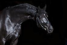 Black Horse Black Background