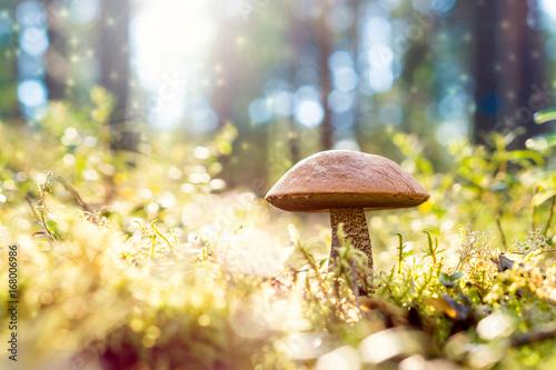 Brown mushroom in the woods Wallpaper Mural