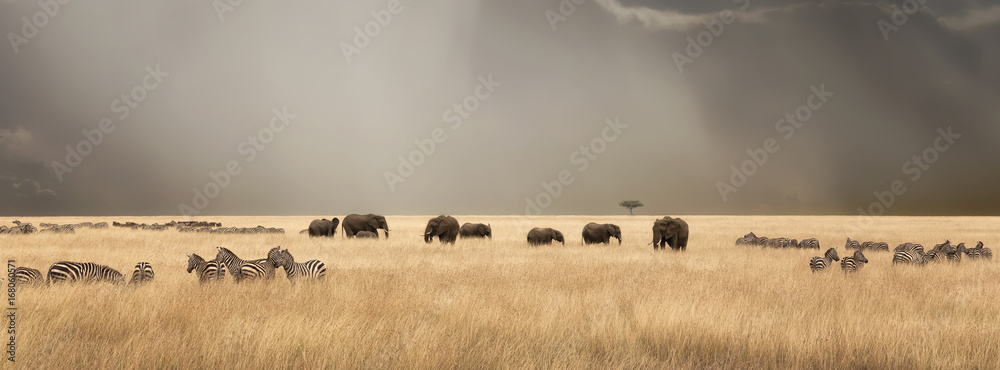 Stormy skies over the masai Mara with elephants and zebras