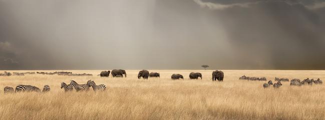 Panel Szklany Łąka Stormy skies over the masai Mara with elephants and zebras