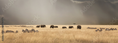 Photo Stands Zebra Stormy skies over the masai Mara with elephants and zebras