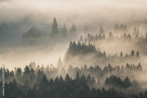 Foto auf AluDibond Morgen mit Nebel first sunny rays in foggy valley