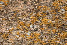 Yellow Moss On Stone Texture