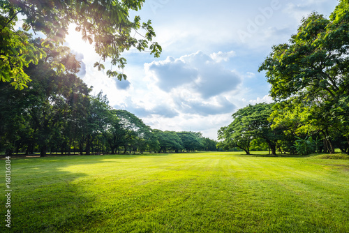 Beautiful morning light in public park with green grass field Tablou Canvas