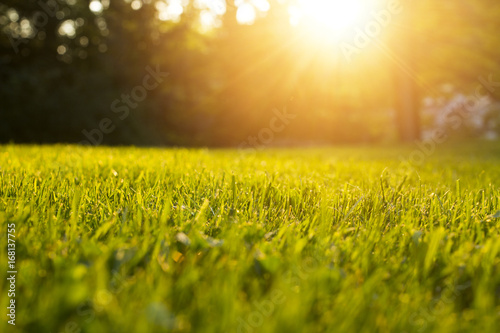 Fotografía  Tranquil fresh grass for growth and water concept mother nature