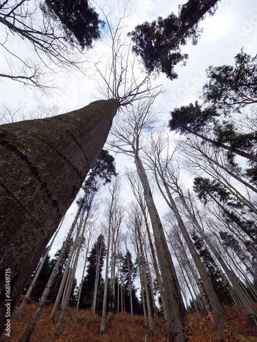 Późnojesienne Bezlistne Korony i pnie drzew