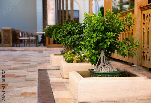 Aluminium Prints Bonsai Landscape design with beautiful Bonsai tree at resort