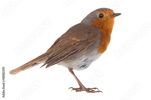 Door stickers Bird European robin (Erithacus rubecula)
