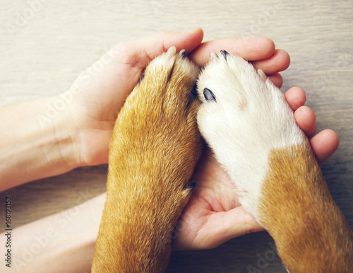 Cadres-photo bureau Chien Dog paws and human hand close up, top view. Conceptual image of friendship, trust, love, help between the person and a dog