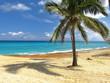 palm trees on the beach of Cuba
