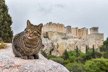 Portrait Of Grey Cat Relaxing In Front Of The Acropolis Of Athens, Greece