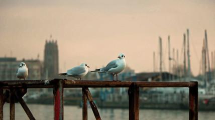 Mouettes dans le port de Dunkerque