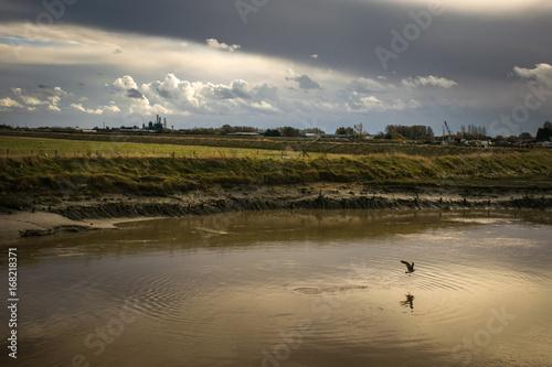 Fotografia, Obraz Lone sea gull flies up marshland river under storm clouds.
