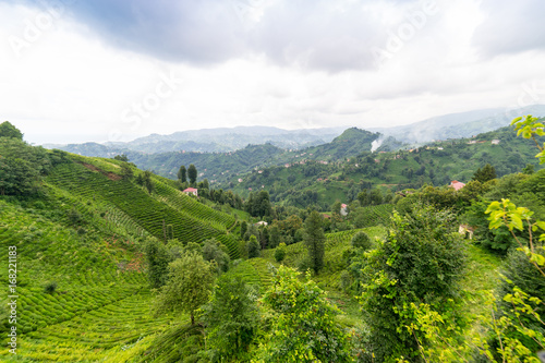 Fotobehang Midden Oosten Tea Plantation Landscape, Rize, Turkey