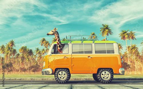 Żyrafa jedzie samochód