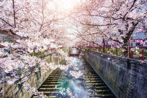 kwitnaca-wisnia-wiosna-w-ja