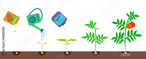 Fotografia, Obraz Growing stages. Gardening vector illustration.