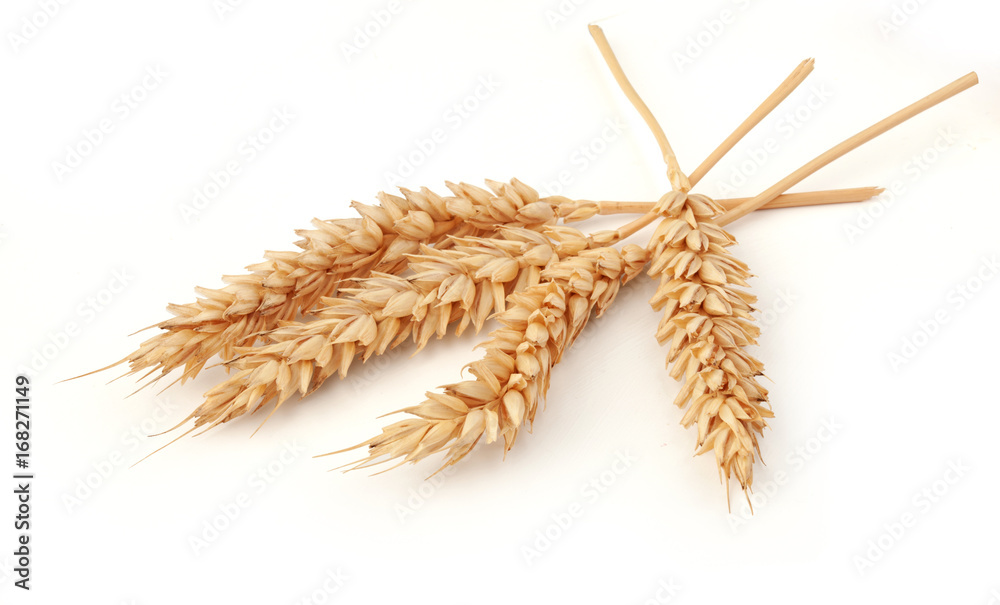 Fototapety, obrazy: Some spikelets of wheat