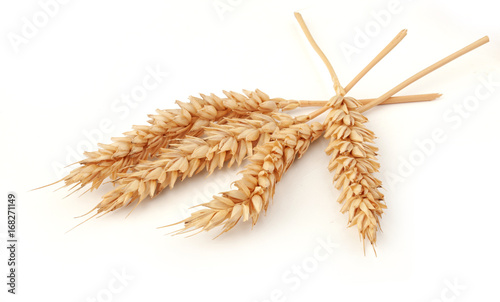 Some spikelets of wheat