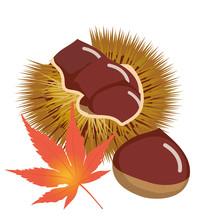 秋の味覚 イガ付きの栗のイラスト Chestnut Illustration