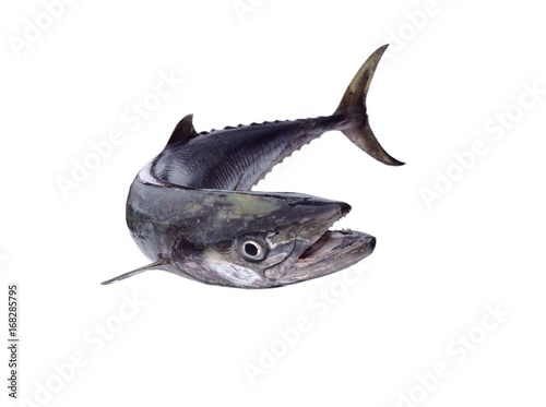 King mackerel fish isolated