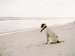 canvas print picture - a dog alone on the beach