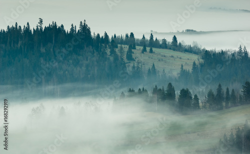 Tuinposter Ochtendstond met mist Foggy morning in Tatra mountains, Zakopane, Poland