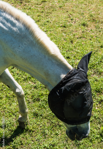 Canvas Prints Horses Serie Dordogne Frankrijk-paard