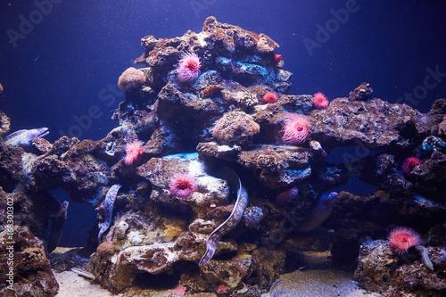 koralowce-i-ryby-w-morzu
