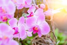 Close-up Of Beautiful Pink Pha...