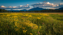 A Goldenrod Meadow In Lake Pla...