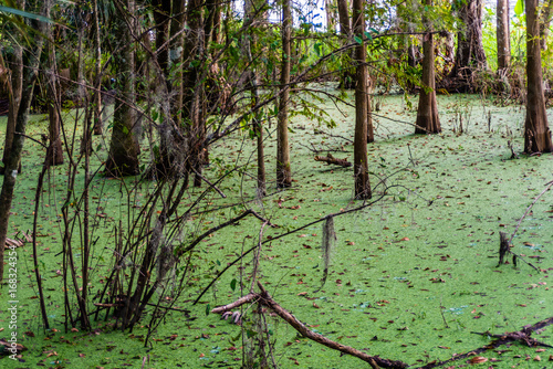 Fotografie, Tablou  Lagoon