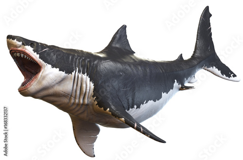 Fotografie, Obraz  3D rendering of Megalodon isolated on a white background.