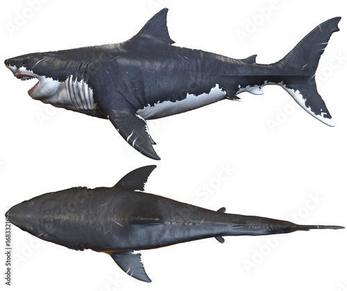 Fotografie, Obraz  3D rendering of Megalodon isolated on a white background..