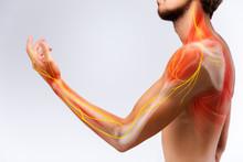 Illustration Of The Human Arm ...