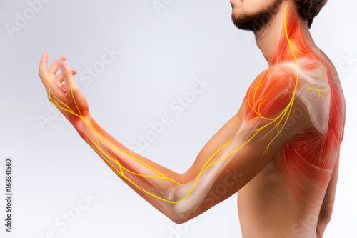 Photo Illustration of the human arm anatomy representing nerves, bones and ligaments