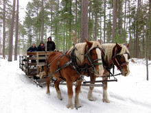 Horse Drawn Sleigh Ride Minnesota USA