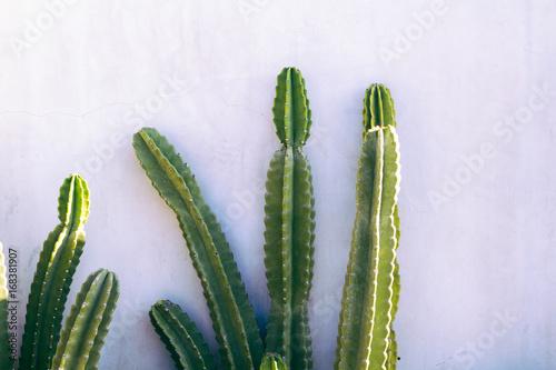 Tuinposter Cactus Minimal Cactus