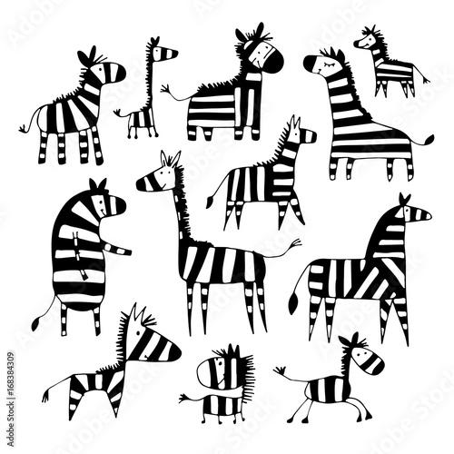 czarno-biale-zebry