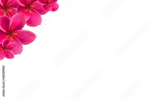 Tuinposter Frangipani plumeria pink flower with isolated background