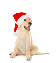Cute Dog In Santa Claus Hat On...