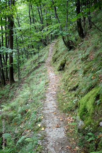 Keuken foto achterwand Olijf Sentier sur une pente en forêt