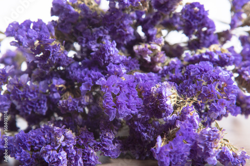 Poster Coral reefs purple statice dry flower