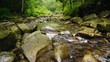 Mountain river or stream flows through the forest. The water boils on large stones. Ecology and clean environment