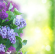 Fresh lilac flowers with green leaves close up over green garden background
