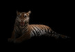 canvas print picture female bengal tiger in the dark