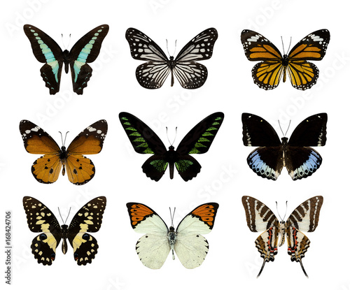 Fototapeta Set of butterfly isolated on white
