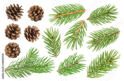 Fotografia Fir tree branch and pine cones isolated on white background