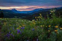 Early Morning Wildflower Field...